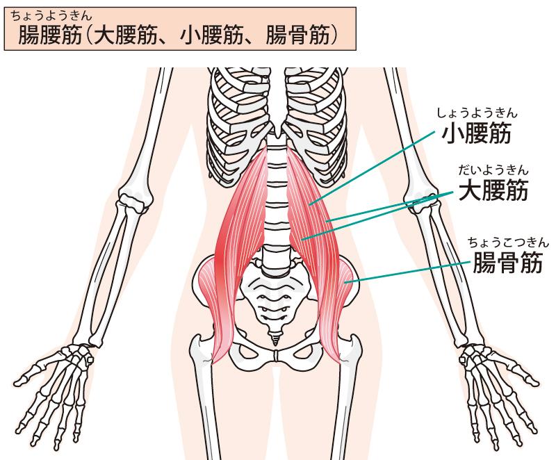 腸腰筋イメージ